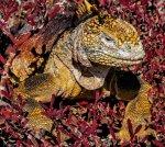 L'Equador i les Illes Galapagos. Un viatge a la biodiversitat i al respecte per la natura