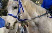 Tot a punt per a la Festa dels Tonis, pionera en el benestar animal