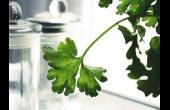 Taller de plantes culinàries al Parc de les Olors