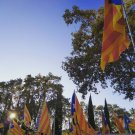 Manifestació Llibertat (9)
