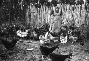 Concepció Mas donant el menjar a les gallines a Can Sentinella