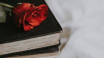 On comprar llibres i roses, aquest Sant Jordi?