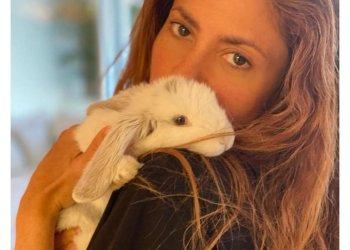 Els famosos conills de Shakira, Piqué, Sara Roy i Miki Núñez provenen de Taradell