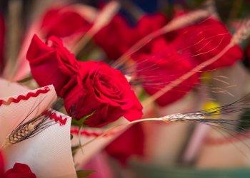 L'agenda de Sant Jordi a Taradell