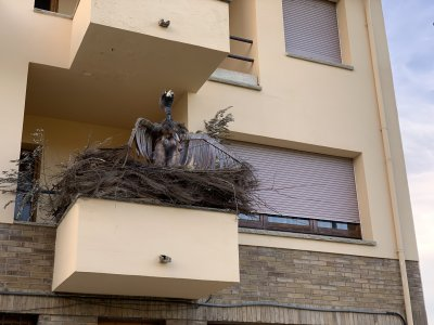 Concurs de balcons i finestres Carnaval 2132