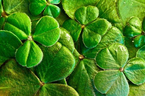 Storytelling: 'Tales of Saint Patrick and Ireland'