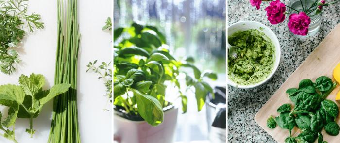 Taller culinari plantes aromàtiques