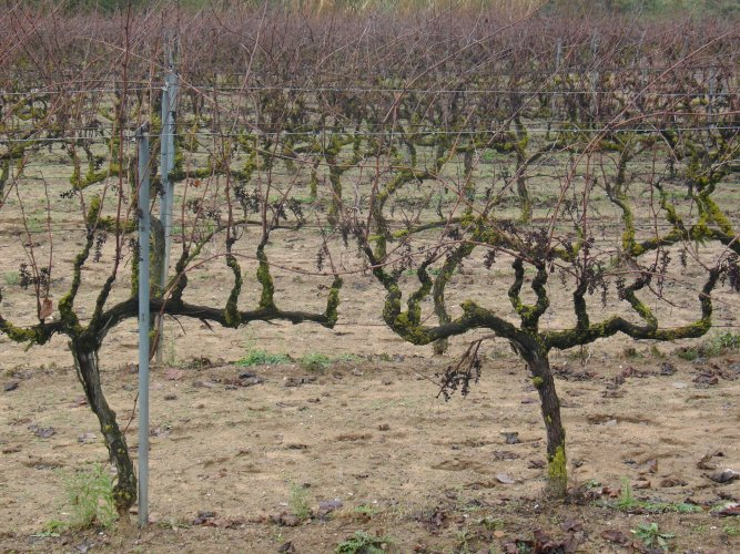 La Vinya a Taradell