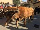 Isona Passola i 'El foraster', principals atractius de la Festa dels Tonis